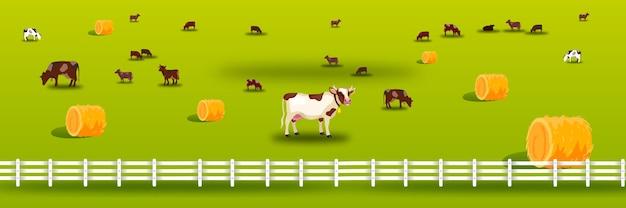 Illustrazione di fattoria biologica con mucche, recinzione, mucchi di fieno, bestiame, prato verde, pascolo