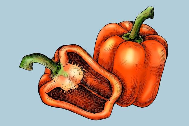 Vettore di peperone dolce appena affettato biologico