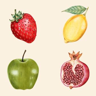 Raccolta disegnata a mano di vettore dell'annata di frutta biologica