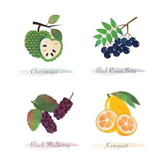 Cibo sano biologico frutta cherimoya black rowan berry black kumquat di gelso
