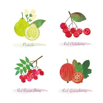 Alimenti sani biologici frutta pomelo rosso aronia rossa bacche di sorbo rosso uva spina