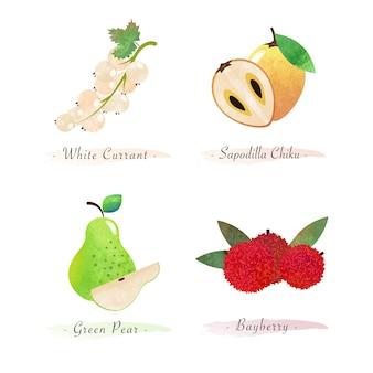 Cibo sano biologico frutta ribes bianco sapodilla chiku pera verde bayberry