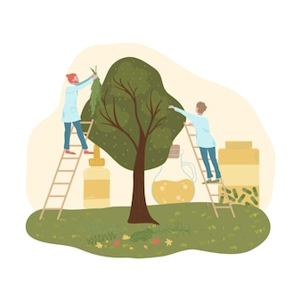 Medicina organica, oli di alberi e piante selvatiche, i medici raccolgono foglie per illustrazione piatta prodotti naturopatia.
