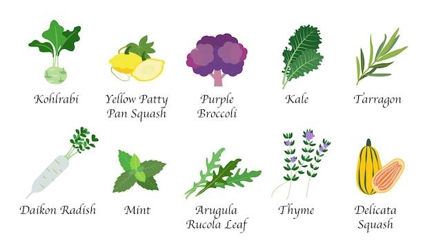 Raccolta isolata della spezia dell'alimento vegetale di salute della natura organica