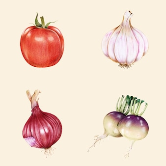Raccolta disegnata a mano di vettore dell'annata di verdure biologiche