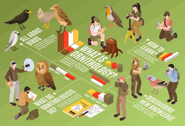 Diagramma di flusso infografica educativa isometrica ornitologo