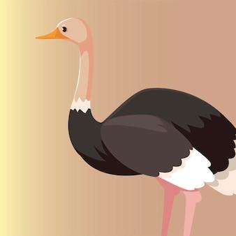 Illustrazione nativa della fauna selvatica animale australiano di struzzo