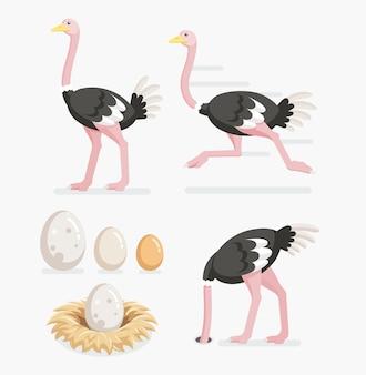 Struzzo e uova di struzzo sui nidi.