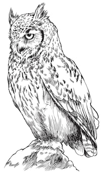 Gufo. schizzo, disegnato, ritratto grafico di un gufo su sfondo bianco.