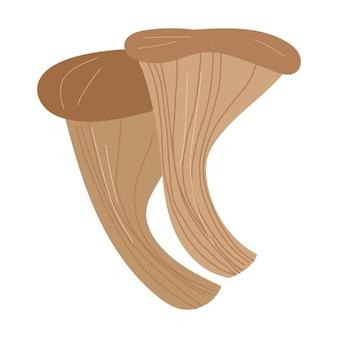 Illustrazione disegnata a mano del fumetto di vettore del fungo di ostrica isolato su priorità bassa bianca.