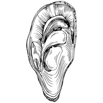 Vettore di ostriche con illustrazione in stile incisione del logo o emblema per il menu di pesce di design, pranzo. classica steakhouse americana o antipasto da bistrot francese.