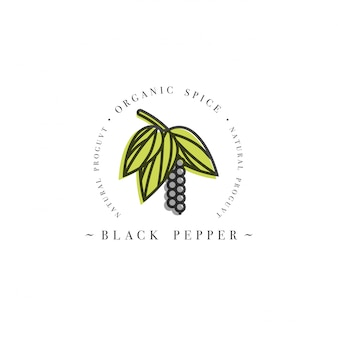 Logo ed emblema del modello di progettazione di imballaggio - erba e spezia - pepe nero sbocciante con i semi. logo in stile lineare alla moda.