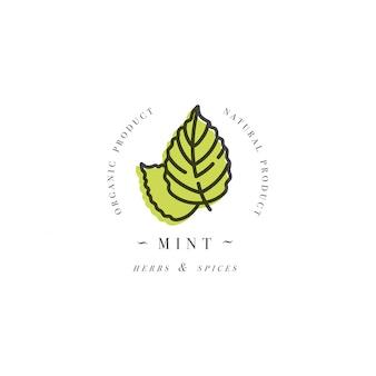 Logo ed emblema del modello di progettazione di imballaggio - erba e spezia - foglia di menta. logo in stile lineare alla moda.