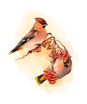 Un paio di bellissimi uccelli invernali waxwing uccello seduto su un ramo su sfondo bianco, schizzo disegnato a mano. illustrazione di vernici