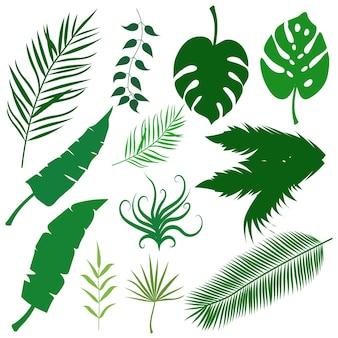 Collezione di foglie di palma