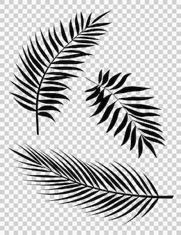 Illustrazione vettoriale di foglie di palma set di sagome di foglie di palma realistiche forme di colore nero