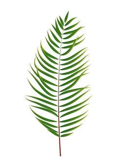 Sagoma di foglia di palma isolata su sfondo bianco