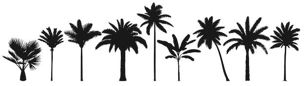Sagoma di alberi di palma.