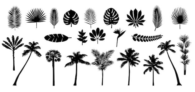 Insieme della siluetta di piante e foglie tropicali di palma
