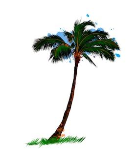 Palma tropicale da una spruzzata di disegno colorato ad acquerello realistico
