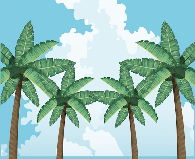 Decorazione del cielo delle nuvole dell'albero di palme tropicale