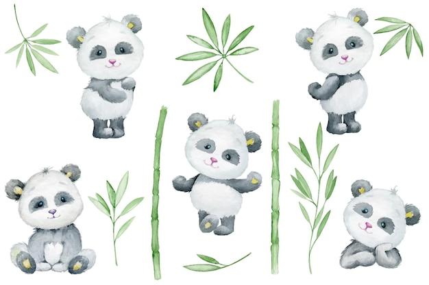 Panda, carino, animale, bambù, foglie e rami. acquerello, insieme.