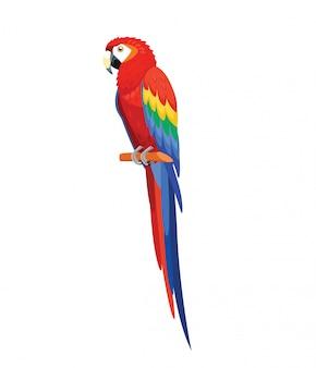 Uccello del pappagallo isolato su bianco