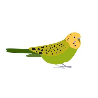 Pappagallo pappagallino verde pet pollame piccolo uccello uccello esotico luminoso bel pulcino