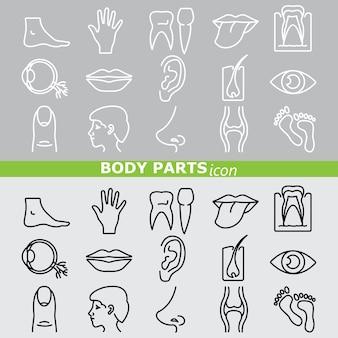 Icona del corpo delle parti. set lineare.