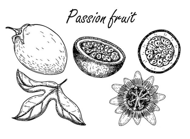 Set di schizzi di frutto della passione