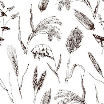 Modello con colture di cereali disegnati a mano. sfondo botanico.