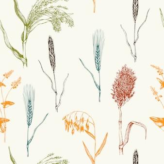 Modello con colture di cereali disegnati a mano. mano abbozzato sfondo di piante agricole