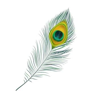 Icona isolata di piuma di pavone