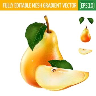 Illustrazione della pera su bianco