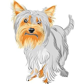 Cane di razza yorkshire terrier