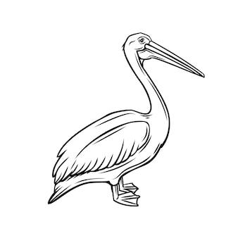 Icona di contorno del pellicano. distintivo di uccello per zoo