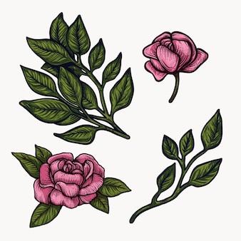 Clipart rosa variopinto isolato disegnato a mano di fioritura dei fiori della peonia.