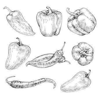 Insieme disegnato a mano di pepe. disegna peperoncini rossi e peperoni. verdure biologiche. verdura di schizzo. illustrazione di stile inciso.