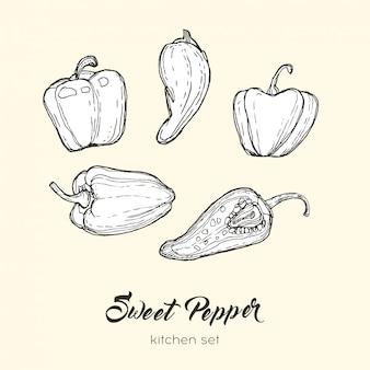 Set di pepe isolato. peperoncino dolce del peperoncino rosso del peperone della paprica dell'illustrazione disegnata a mano bianca nera.