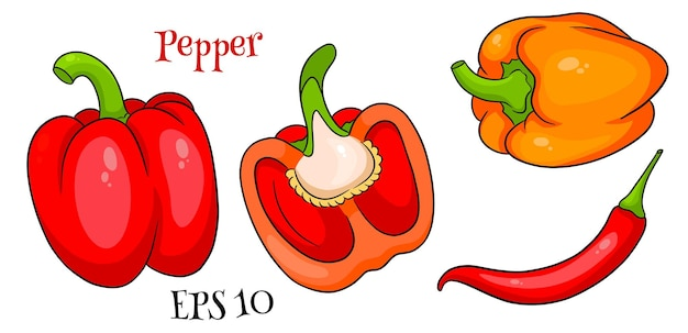 Insieme del pepe. peperoni freschi e peperoncino. in stile cartone animato. illustrazione vettoriale per design e decorazione.