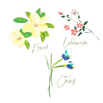 Elementi di illustrazione dell'acquerello di ingredienti del profumo