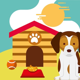 Cane domestico che si siede con il cibo e la casa del cane della palla del giocattolo