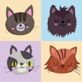 Animali domestici set di icone gatti felino mascotte animale, facce su blocchi colore design illustrazione