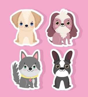 Animali domestici piccoli cani insieme