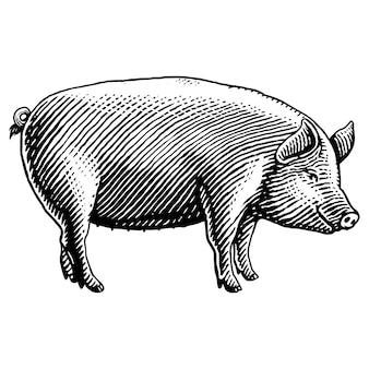 Illustrazione disegnata a mano di maiale incisione Vettore Premium