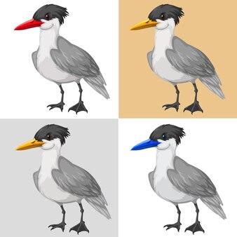 Uccello piccione su sfondo di colore diverso