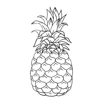 Illustrazione disegnata a mano di schizzo di ananas isolato