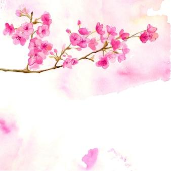 Sfondo rosa con ramo acquerello di fiori di ciliegio. illustrazione vettoriale di sakura.