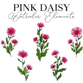 Illustrazione degli elementi dell'acquerello del fiore della margherita rosa