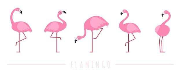 Fenicottero rosa. personaggi di uccelli tropicali esotici.